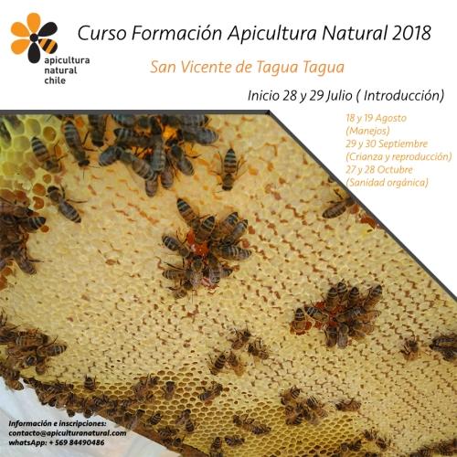 Curso apicultura san vicente